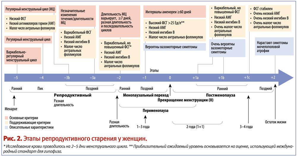 Полная таблица менопауза